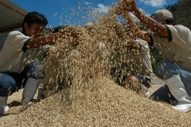 La-Florida-Fairtrade-Kooperative