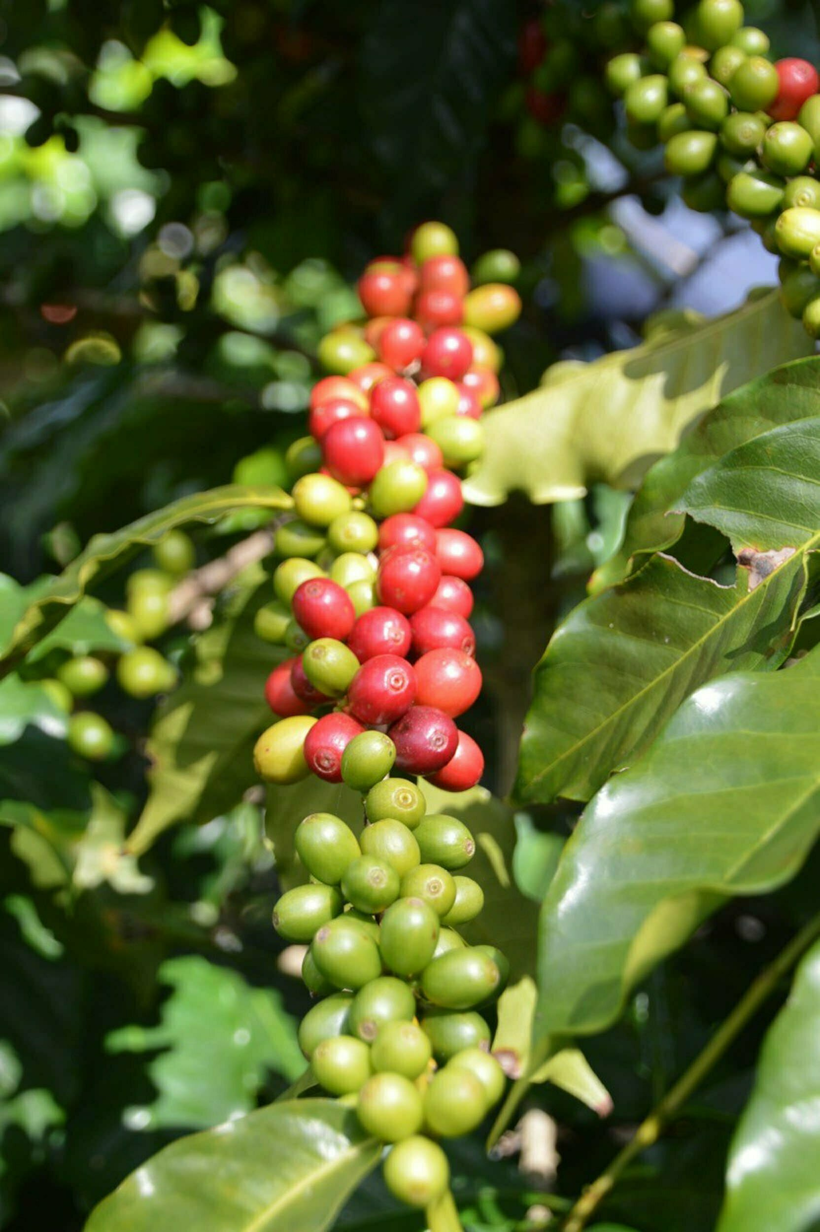 Demeter Kaffee
