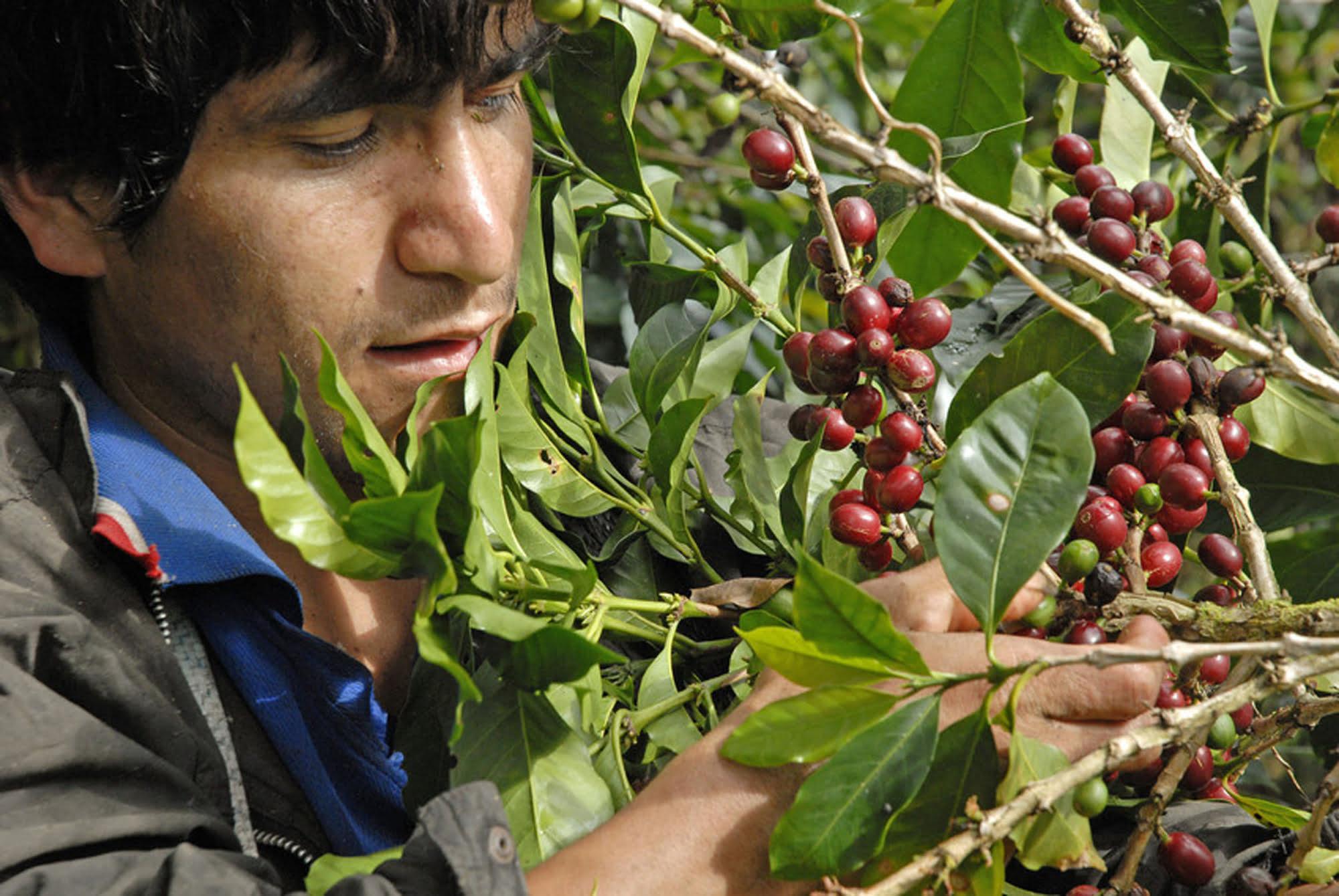 Sombrero unsere Max Havelaar Kaffees