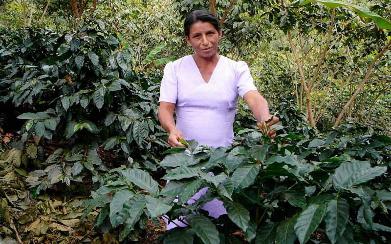 So ist der biologische anbau unserer kaffeekirschen von